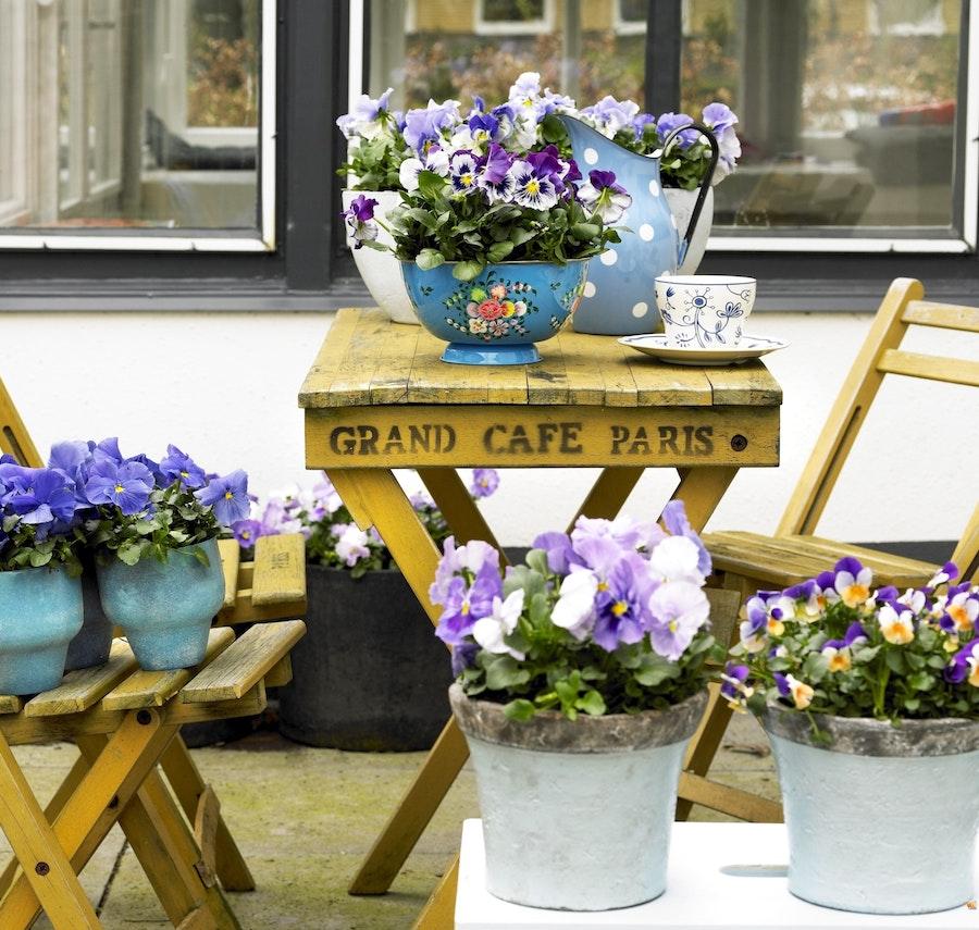 mooiwatplantendoen.nl 23948