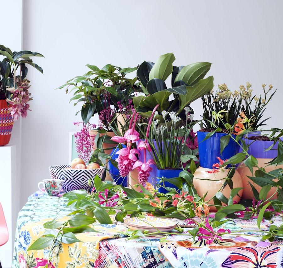 mooiwatplantendoen.nl Tropische schoonheden 04