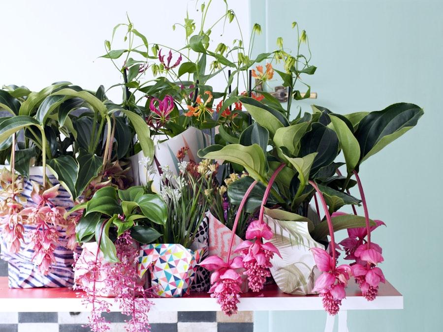 mooiwatplantendoen.nl Tropische schoonheden 06