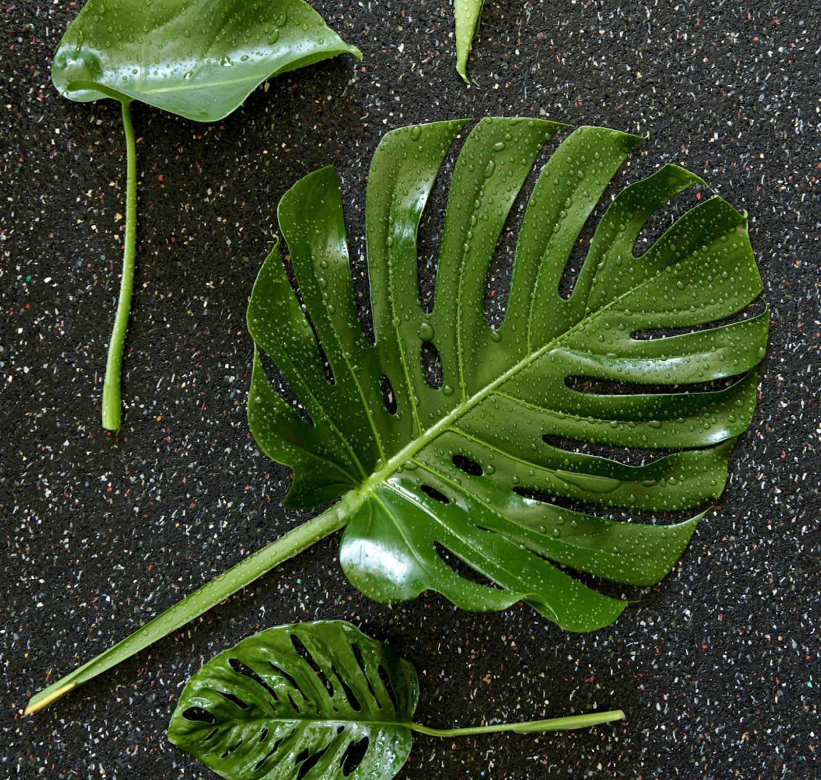 mooiwatplantendoen.nl 1206 520