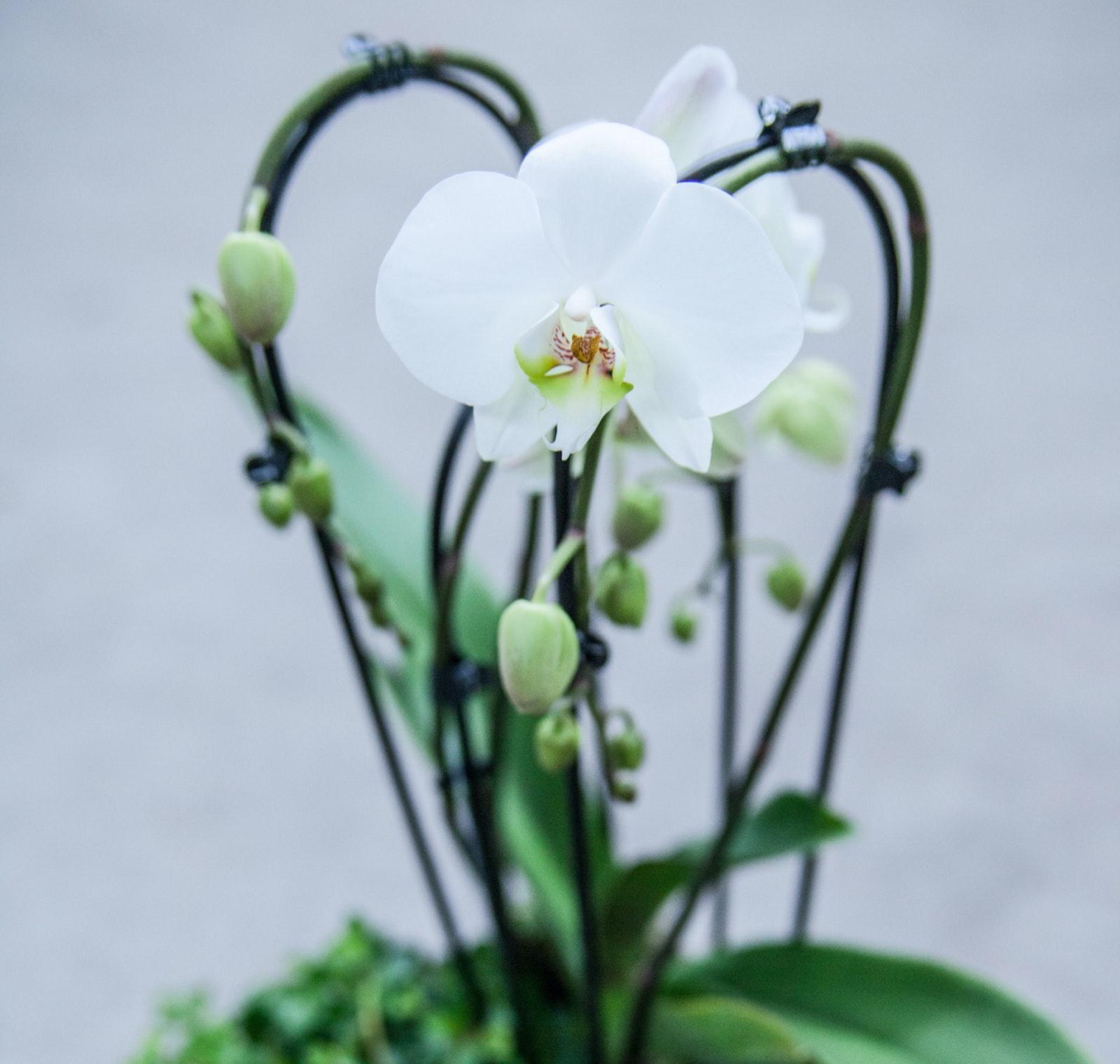 Plantenarrangementen 9