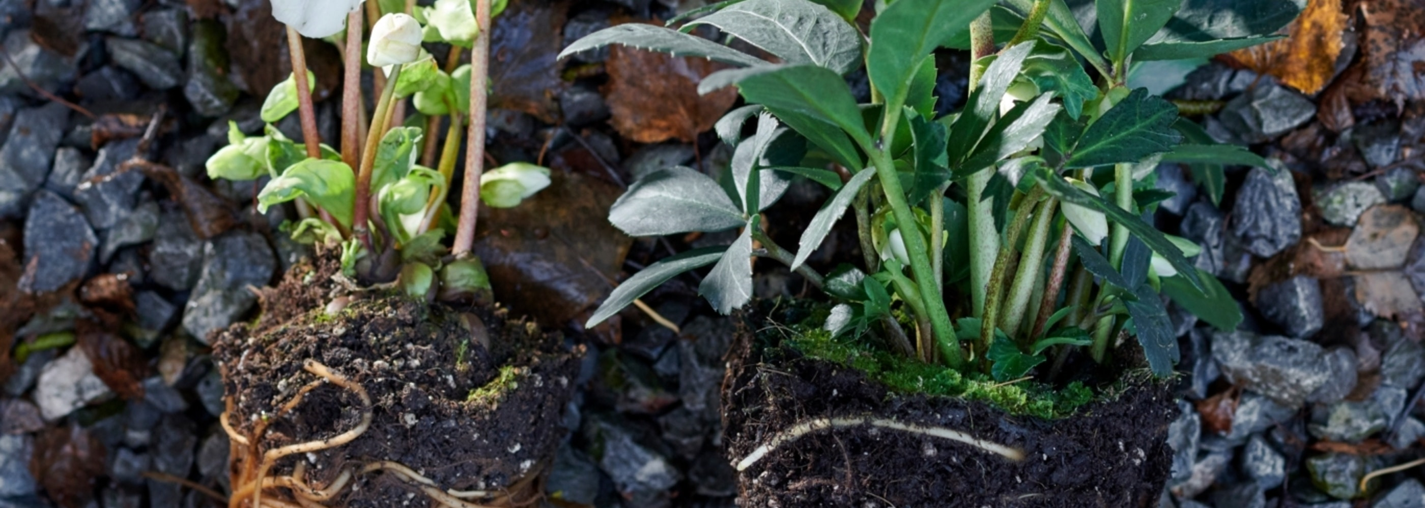 mooiwatplantendoen.nl 1206 296