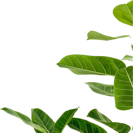 Ebus plant home